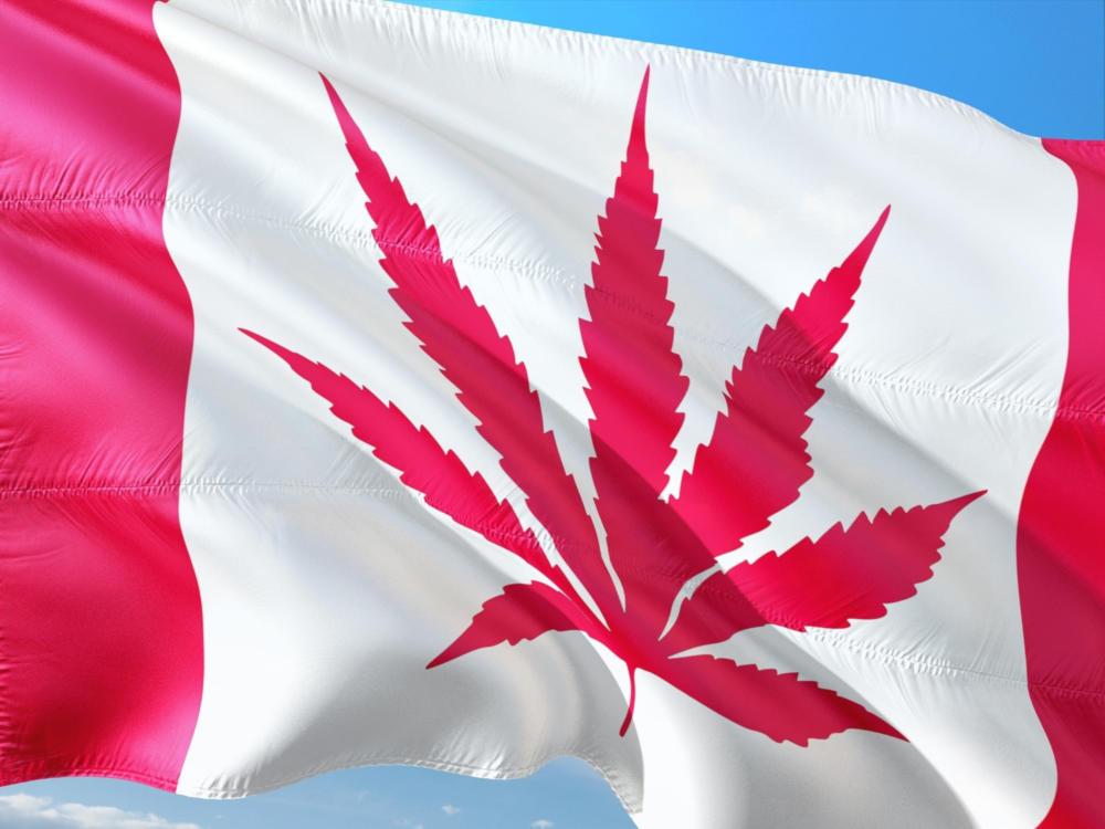 GrowerIQ & the Canadian Cannabis Act