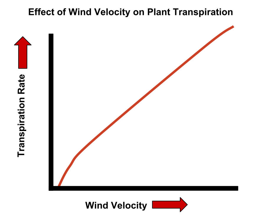 Effect of wind velocity on plant transpiration