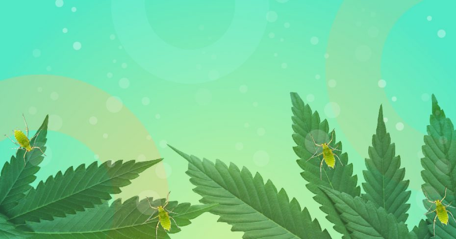 GrowerIQ Cannabis Consulting: Inspection Preparation