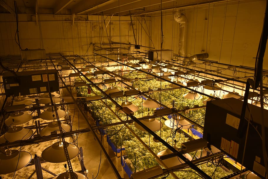 setting up a commercial grow room is a great option for medicinal cannabis producers.