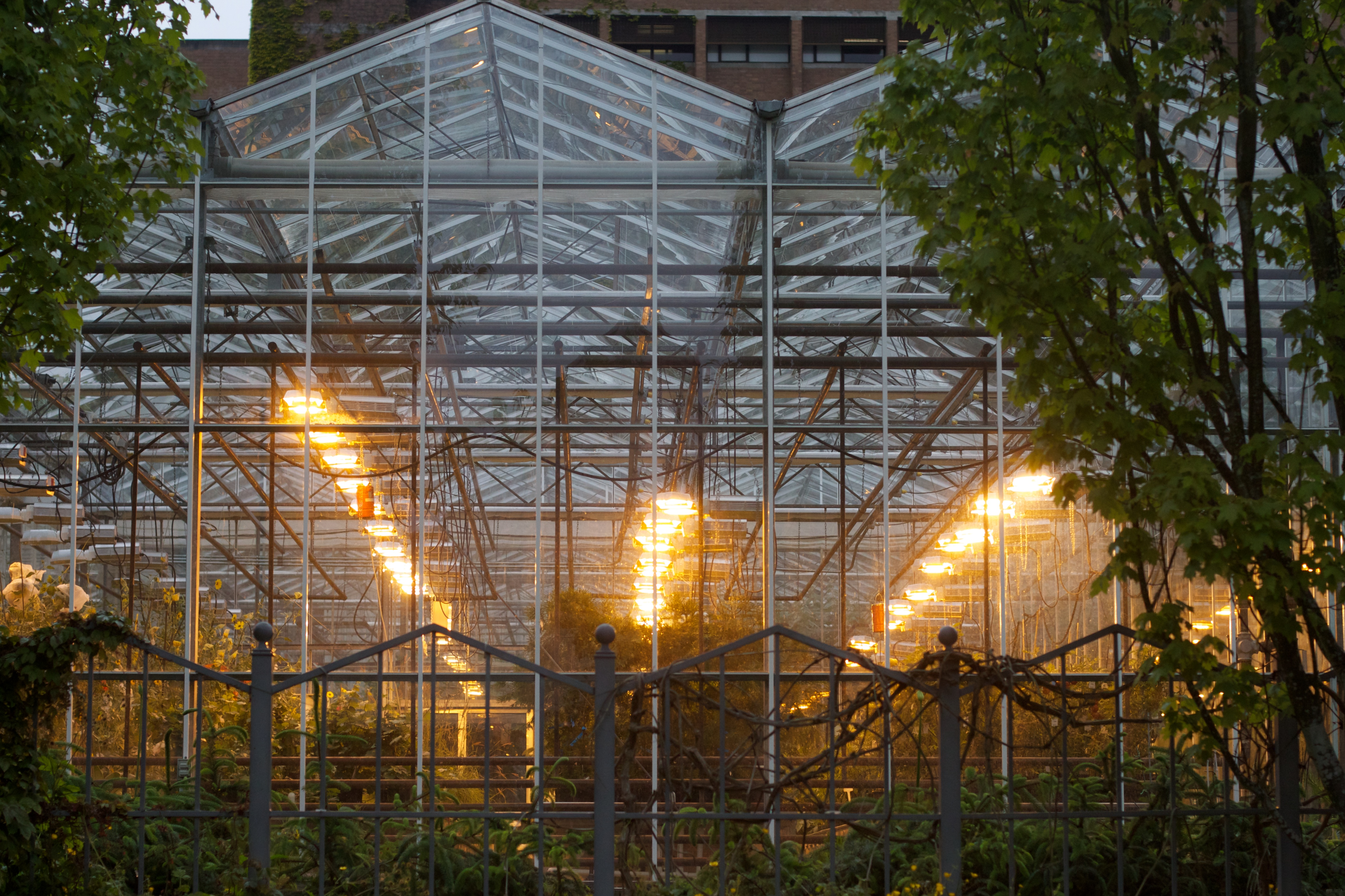 In cold months greenhouses need additional lighting to control growth cycles and supplement the sun.
