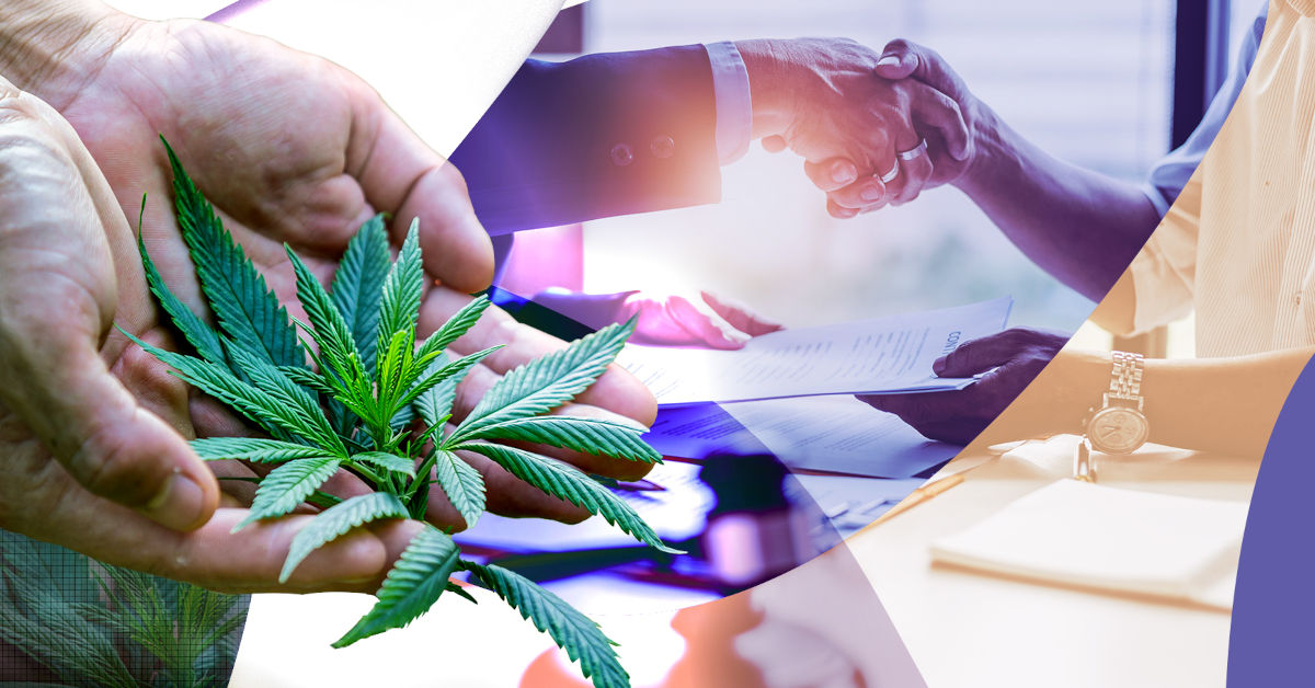 GrowerIQ's Consultants Help You to Become a Licensed Producer