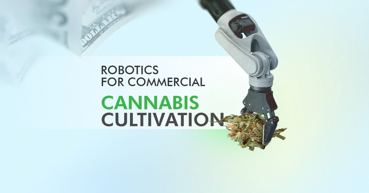 Cultivating Cannabis with Robots