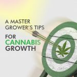 A Master Grower's Tips for Cannabis Growth